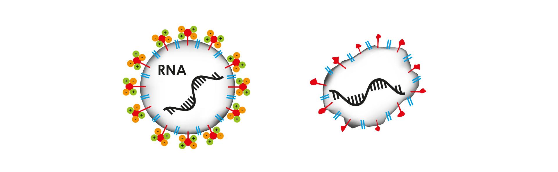 RNA Virus Corona Therapy PI-RNA Cold Plasma